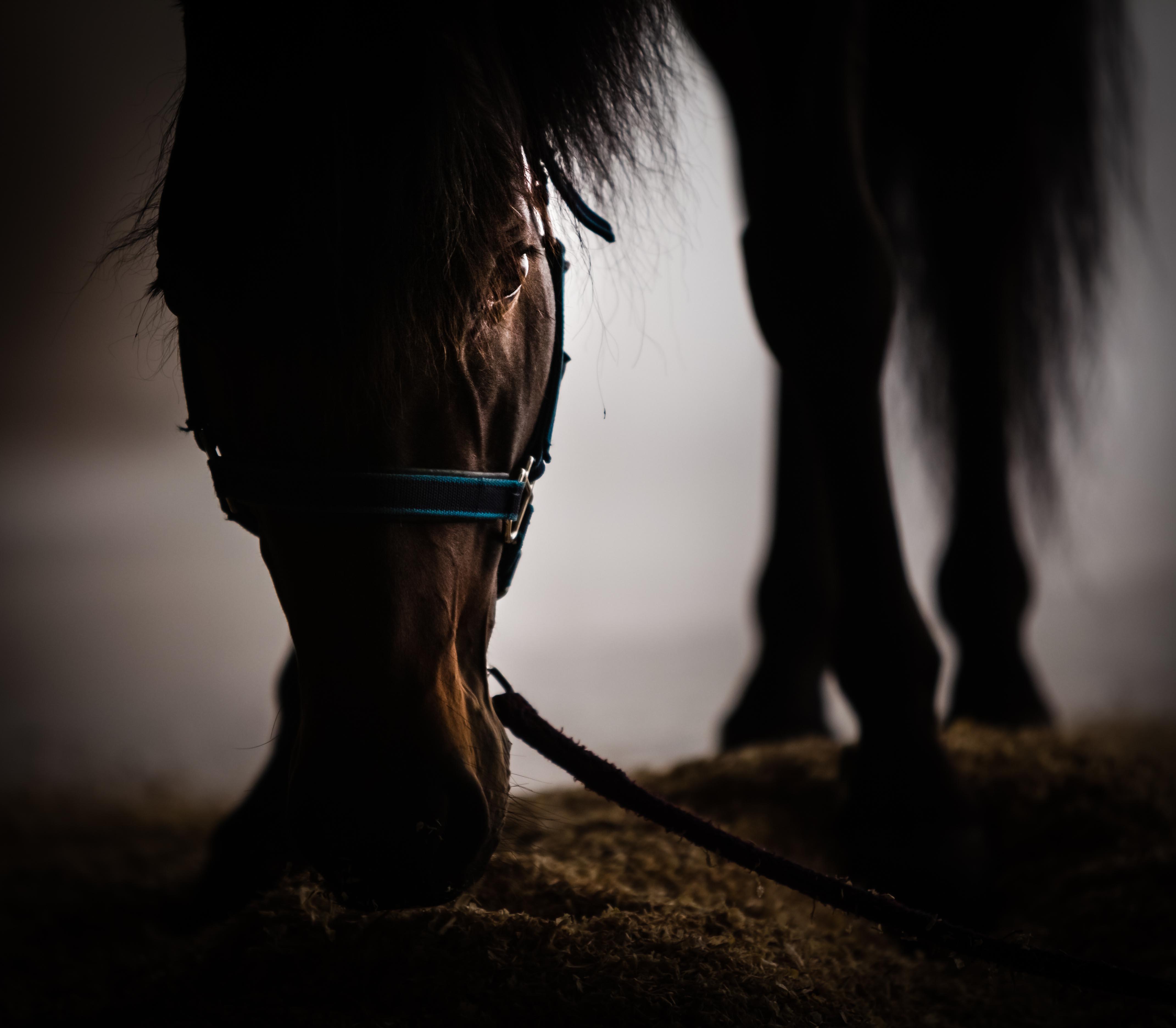 The Dark Horse 2
